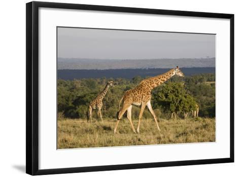 Masai Giraffe (Giraffa Camelopardalis Tippelskirchi)-Angelo Cavalli-Framed Art Print