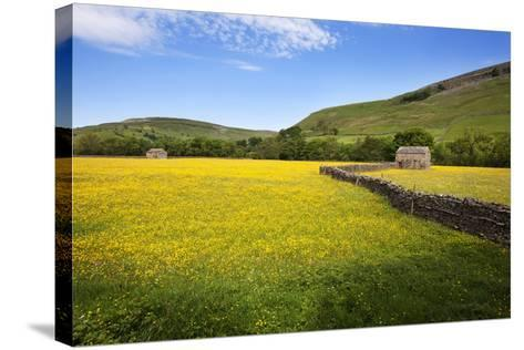 Field Barns and Buttercup Meadows at Muker-Mark Sunderland-Stretched Canvas Print