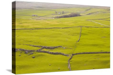 Typical Yorkshire Dales Countryside, Yorkshire, England, United Kingdom, Europe-Julian Elliott-Stretched Canvas Print