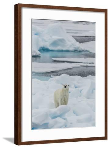 Young Adult Polar Bear (Ursus Maritimus) on Ice in Hinlopen Strait-Michael Nolan-Framed Art Print
