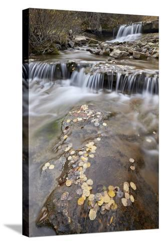 Falls on the Big Bear Creek in the Fall-James Hager-Stretched Canvas Print
