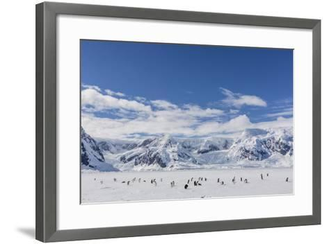 Adult Gentoo Penguins (Pygoscelis Papua) in the Enterprise Islands-Michael Nolan-Framed Art Print