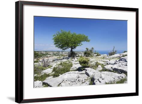 Single Tree on a Plateau, Vidova Gora, Brac Island, Dalmatia, Croatia, Europe-Markus Lange-Framed Art Print