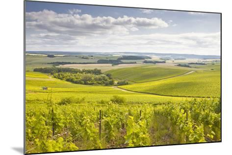 Champagne Vineyards in the Cote Des Bar Area of Aube, Champagne-Ardenne, France, Europe-Julian Elliott-Mounted Photographic Print