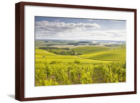 Champagne Vineyards in the Cote Des Bar Area of Aube, Champagne-Ardenne, France, Europe-Julian Elliott-Framed Art Print