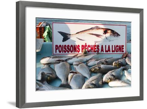 Sunday Fish Market at Vieux Port-Nico Tondini-Framed Art Print