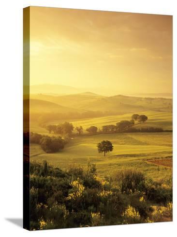 Single Tree at Sunrise-Markus Lange-Stretched Canvas Print