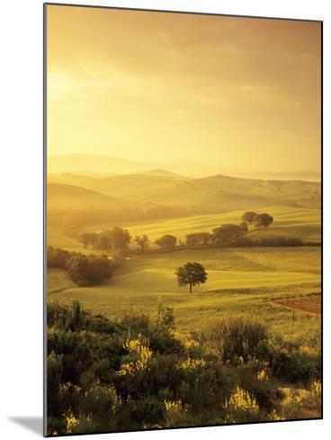 Single Tree at Sunrise-Markus Lange-Mounted Photographic Print