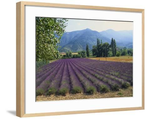 Lavender Field, Plateau De Sault, Provence, France-Guy Thouvenin-Framed Art Print