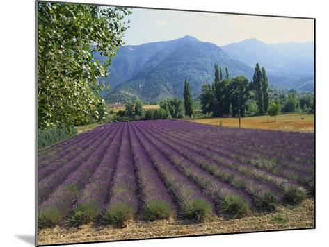 Lavender Field, Plateau De Sault, Provence, France-Guy Thouvenin-Mounted Photographic Print