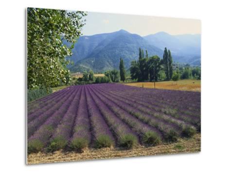 Lavender Field, Plateau De Sault, Provence, France-Guy Thouvenin-Metal Print