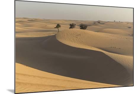 The Desert Near Liwa, Abu Dhabi, United Arab Emirates, Middle East-Angelo Cavalli-Mounted Photographic Print