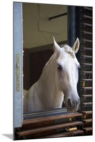 Spanish Riding School Stables, Vienna, Austria, Europe-Neil Farrin-Mounted Photographic Print