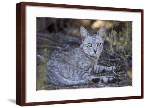 African Wild Cat (Felis Silvestris Lybica)-James Hager-Framed Art Print