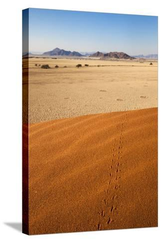 Animal Tracks in Sand, Namib Desert, Namibia, Africa-Ann and Steve Toon-Stretched Canvas Print