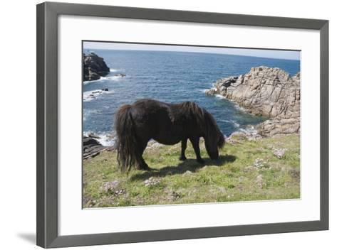 Ponies on Bryher, Isles of Scilly, Cornwall, United Kingdom, Europe-Robert Harding-Framed Art Print