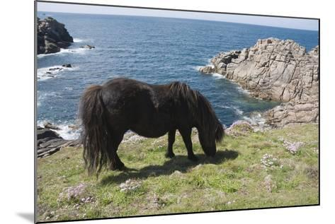 Ponies on Bryher, Isles of Scilly, Cornwall, United Kingdom, Europe-Robert Harding-Mounted Photographic Print