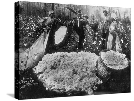 Manager Weighing Picked Cotton--Stretched Canvas Print