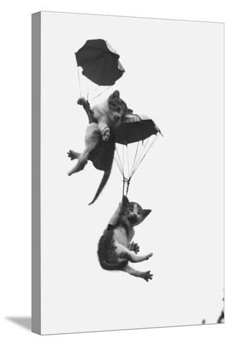 Parachuting Kittens--Stretched Canvas Print
