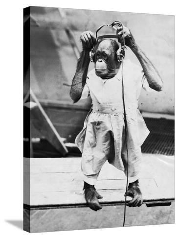 Orangutan Listens to Headphones--Stretched Canvas Print