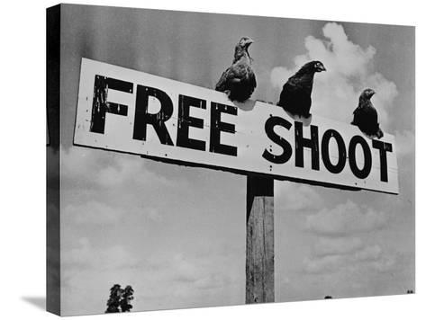 """Grouse on """"Free Shoot"""" Sign--Stretched Canvas Print"""