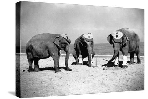 Elephants Play Beach Cricket--Stretched Canvas Print