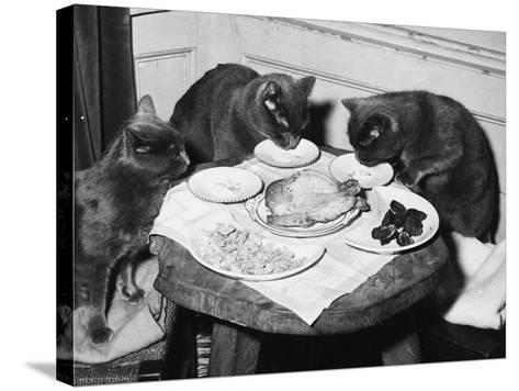 Cats' Celebratory Feast--Stretched Canvas Print