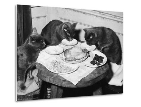 Cats' Celebratory Feast--Metal Print