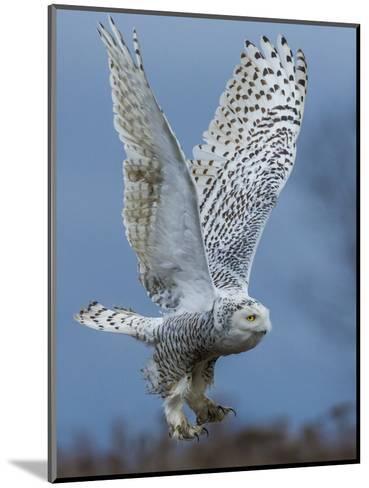 Bird of Prey-Art Wolfe-Mounted Photographic Print