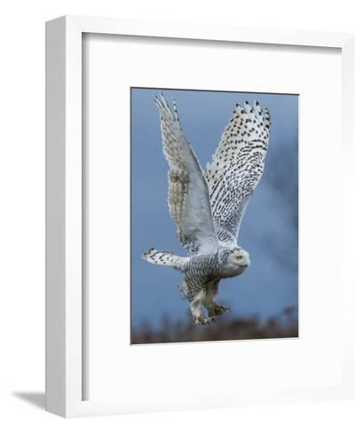 Bird of Prey-Art Wolfe-Framed Art Print