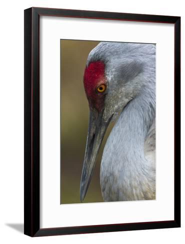 Bird-Art Wolfe-Framed Art Print