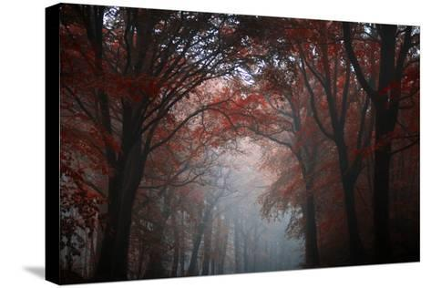 Red Forest-Philippe Manguin-Stretched Canvas Print