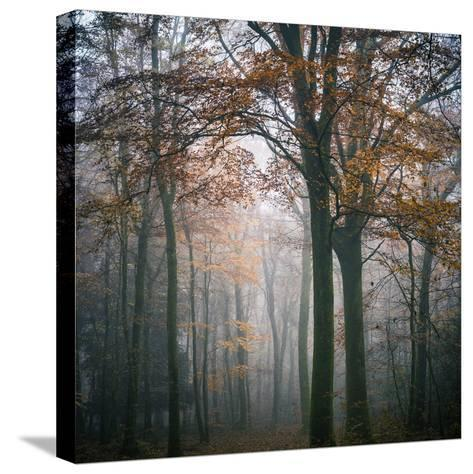 Forest Mood-Philippe Manguin-Stretched Canvas Print