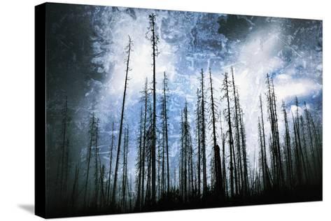 Cold Night-Ursula Abresch-Stretched Canvas Print