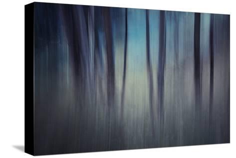 Evening Woods-Ursula Abresch-Stretched Canvas Print