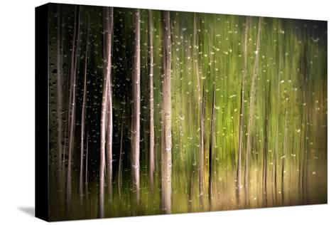 On a Rainy Day-Ursula Abresch-Stretched Canvas Print