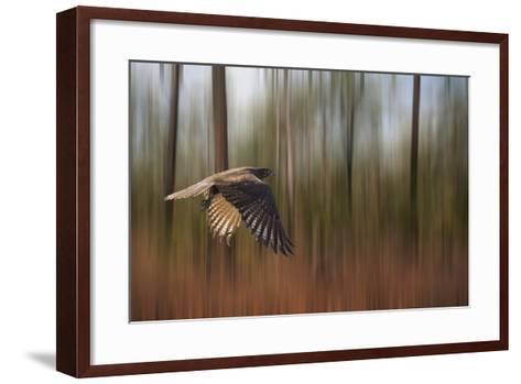 Kakadu Dreaming 1-Margaret Morgan-Framed Art Print