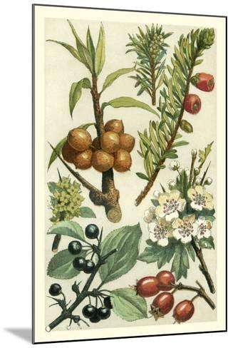 Fruits and Foliage III-Vision Studio-Mounted Art Print