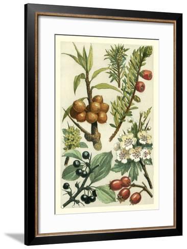 Fruits and Foliage III-Vision Studio-Framed Art Print