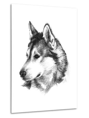 Canine Study III-Ethan Harper-Metal Print