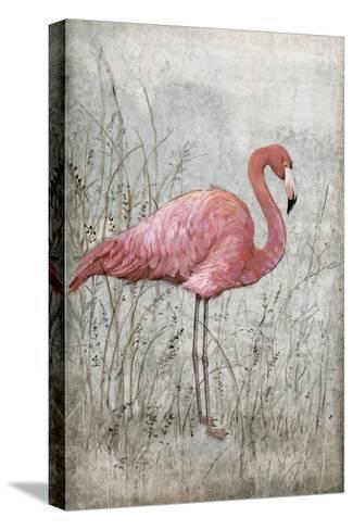 American Flamingo I-Tim O'toole-Stretched Canvas Print