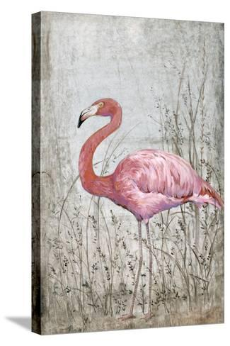 American Flamingo II-Tim O'toole-Stretched Canvas Print