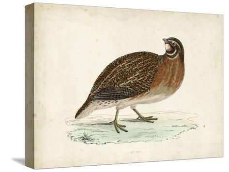 Morris Pheasants IV--Stretched Canvas Print