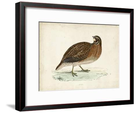 Morris Pheasants IV--Framed Art Print
