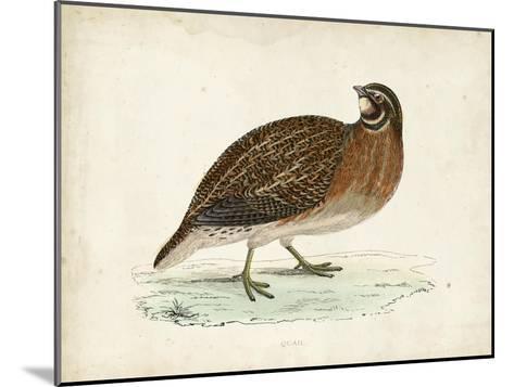 Morris Pheasants IV--Mounted Art Print
