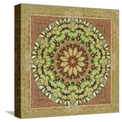Floress Mandala IV-Catherine Kohnke-Stretched Canvas Print