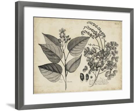 Vintage Folia III-Vision Studio-Framed Art Print