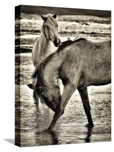Beach Horses I-David Drost-Stretched Canvas Print