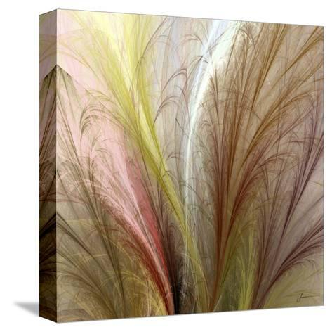 Fountain Grass II-James Burghardt-Stretched Canvas Print