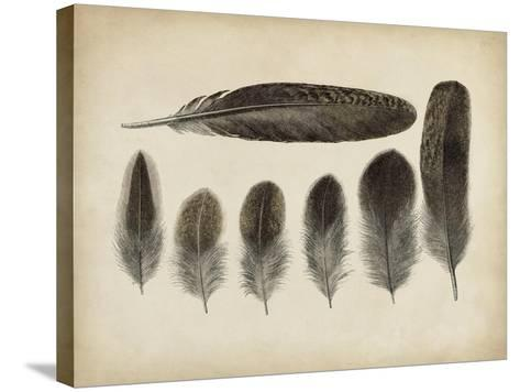 Vintage Feathers VI--Stretched Canvas Print
